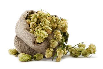 Hops in a bag isolated on white background.
