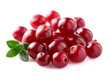Heap of ripe cranberry