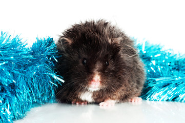 black hamster with christmas gerland