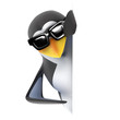 3d Penguin in sunglasses behind a blank page