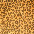 Leopard leather pattern texture closeup