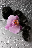 Fototapety Spa stones and orchid flower, on wet grey background.