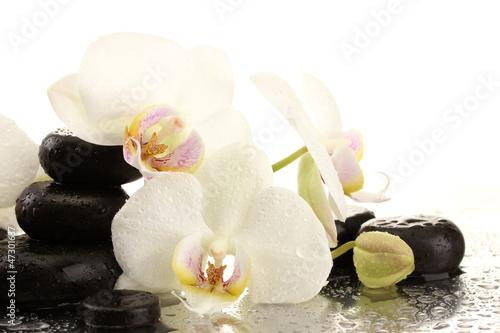 Fototapeten,steine,orchidee,isoliert,die andere hochzeit
