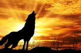 Fototapeta tło - psów - Tła