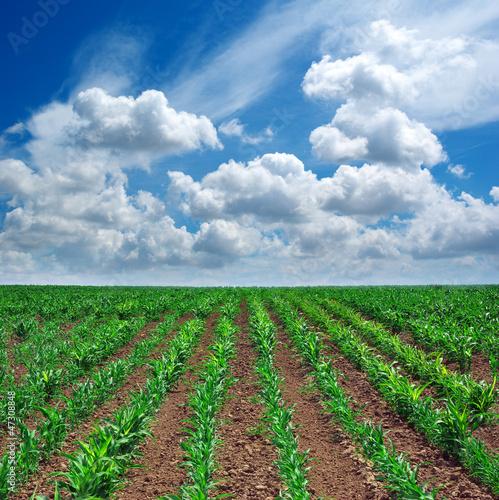 Fototapeten,agricultural,ackerbau,hintergrund,scheune