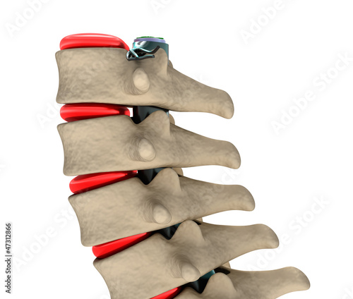 Human Spine, 3D illustration