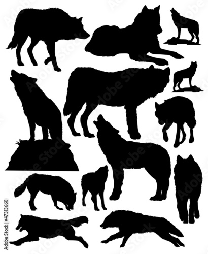 wolves vector - 47313660