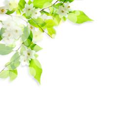 白い花と光