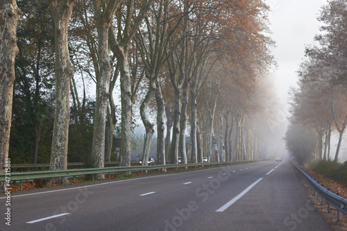 Foggy Road
