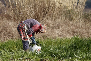 donna raccoglie spinaci con imperbeabile