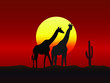 African landscape in sunset time with giraffes