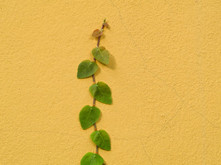 green creeper plant on color wall