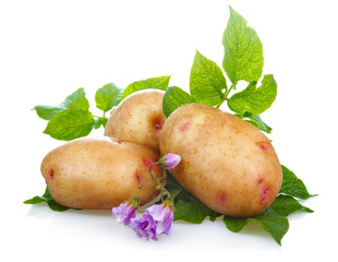Potatoes vegetables with green leaves and blossom isolated
