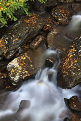 Creek in Smoky Mountains
