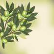 Olive branch with leaves