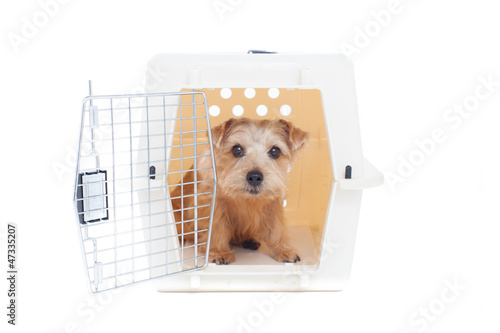 Foto op Plexiglas Dragen キャリーバッグに入った犬