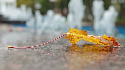 Yellow maple leaf laying on marble edge