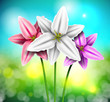 Natural background with lilies