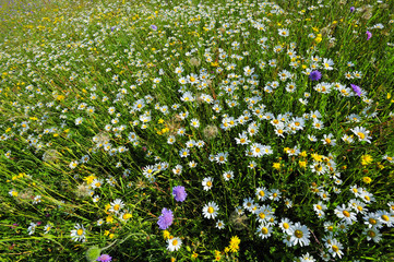A field of wild flowers in spring