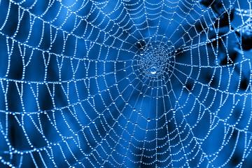 Cobweb with dew drops