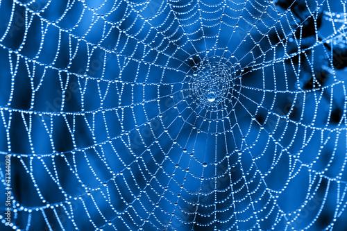 Foto op Canvas Textures Cobweb with dew drops