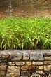Jardin, zen, bambou, décoration, patio, plante, mur