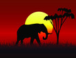 vector elephant in sunset time