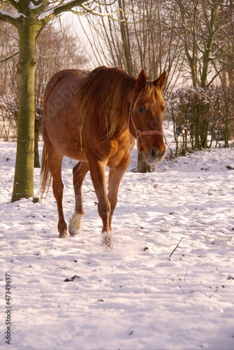 A horse in the snow in the winter