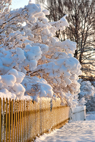 Wooden fence and scrubs in winter