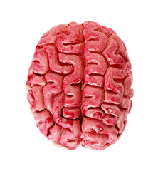 bloody human brain isolated on white background
