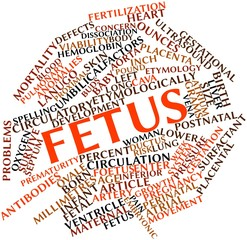 Word cloud for Fetus