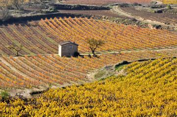 Viñedos en otoño, La Rioja (España)