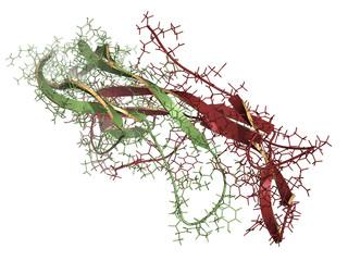 Follicle-stimulating hormone (FSH) molecule, chemical structure