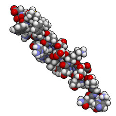 Glucagon peptide hormone molecule, chemical structure
