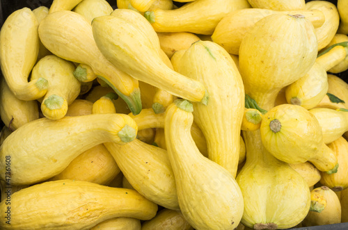 Display of yellow squash at the market