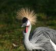 Fototapeten,vögel,avian,balkans,schnabel