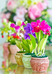 Colorful of Artificial Flower.