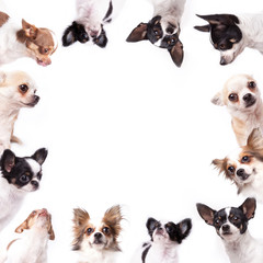 Isolate a circle group of chihuahuas