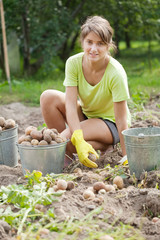 Girl  harvesting potatoes