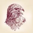 hawk - vector illustration