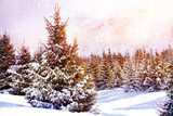 Winter spruce forest in mountains