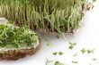 Cress and bread