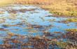 Closeup of a marshy area