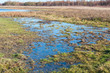 Marshy landscape in Dutch wetlands