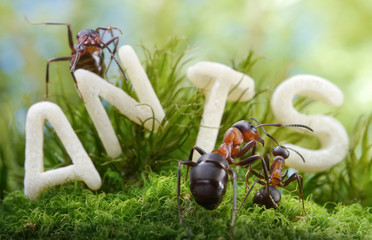not worm, but letter S ! forest school, ant tales
