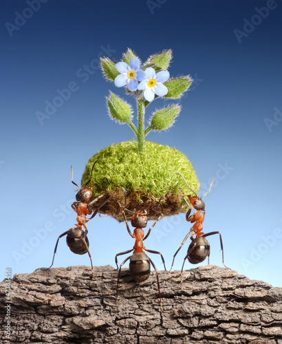 ants bring living nature on dead rocks, eco concept