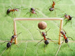 goal in gate, ants play soccer