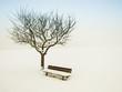 canvas print picture - wundervolle Winterlandschaft 15, Apfelbaum und Bank