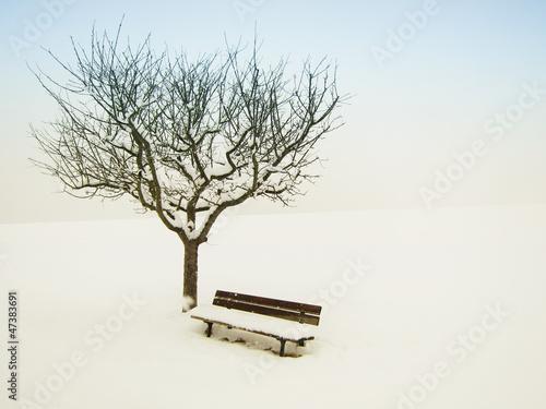 canvas print picture wundervolle Winterlandschaft 15, Apfelbaum und Bank