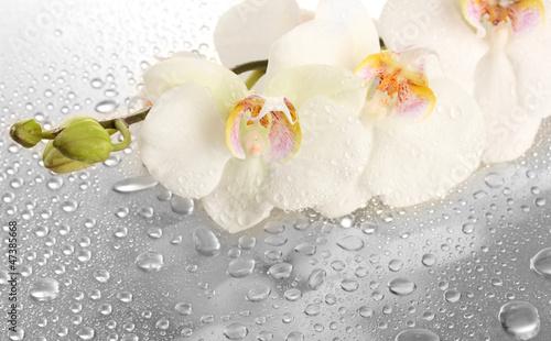 Fototapeten,weiß,schön,orchidee,fallen aufsteigen
